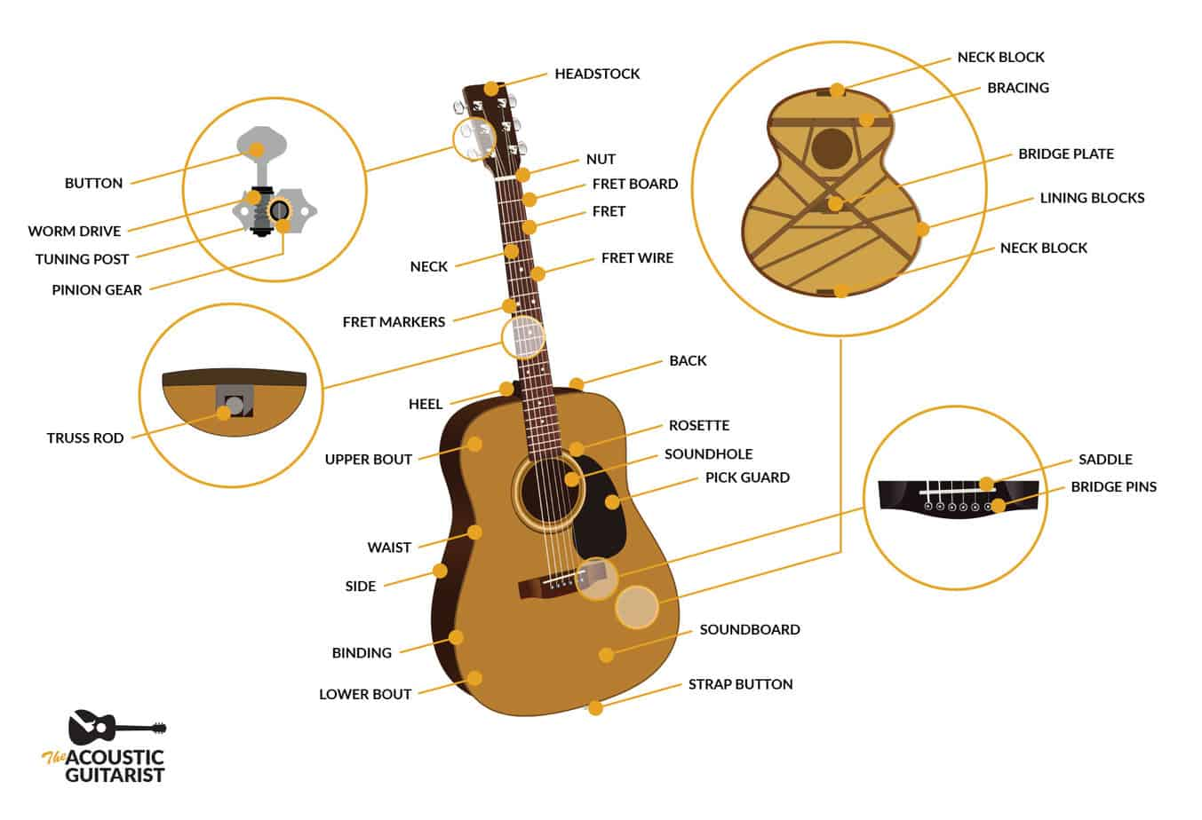 Anatomy Of An Acoustic Guitar  The Complete Guide
